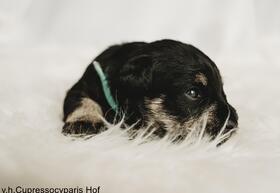 Puppy_blauw