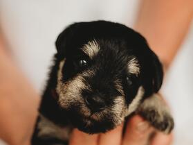 Puppy_oranje1
